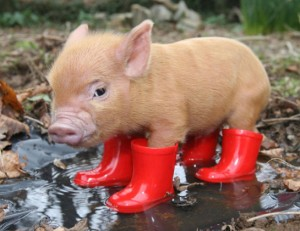 Please sir...I just want to grow up to be your bacon...
